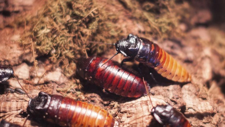 Zeg het met een... kakkerlak
