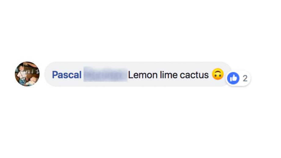 Reactie Pascal
