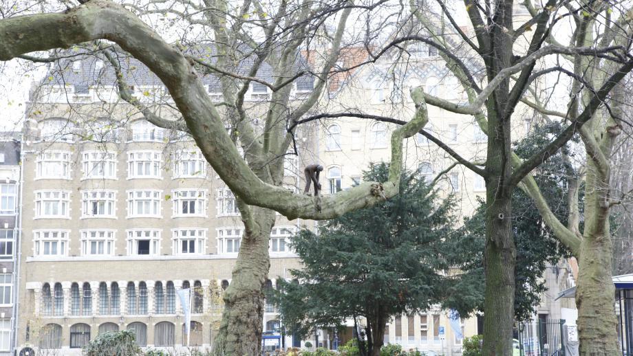 #4: Artiest onbekend - Het boomzagertje
