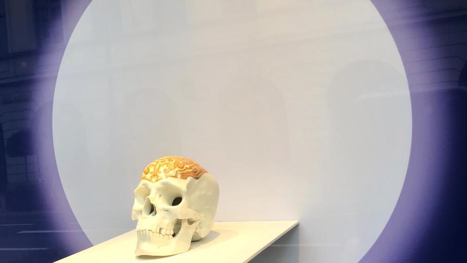 Nymphenburg Skull
