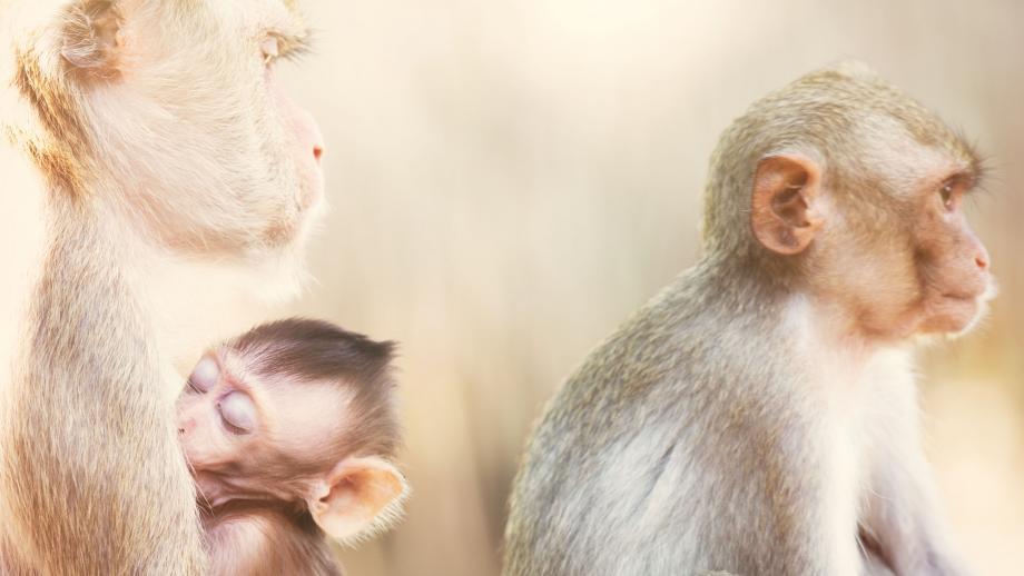 Resus-apen