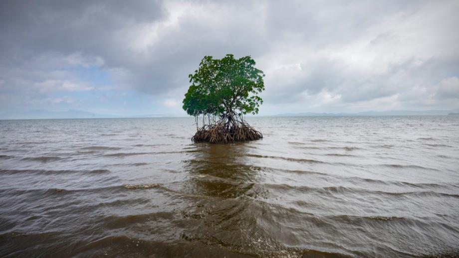 Kadir van Lohuizen -De kustlijn van Vunidogoloa, Fiji (2014)