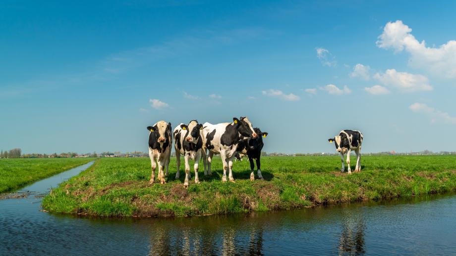 Willen we meer of minder melkvee?