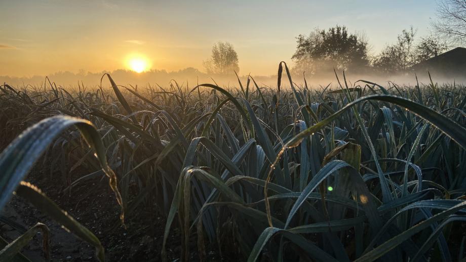 Grow - Daglicht
