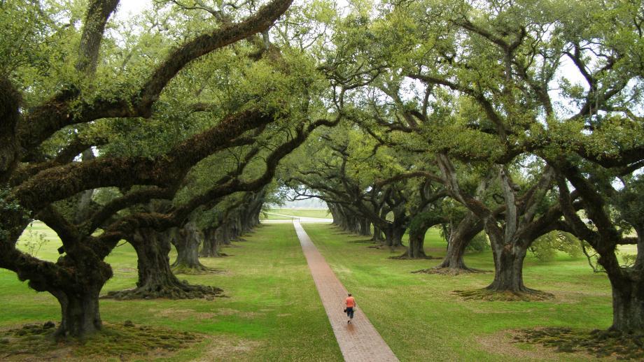 Meer dan 300 jaar oude eiken op de Oak Alley Plantation in de VS