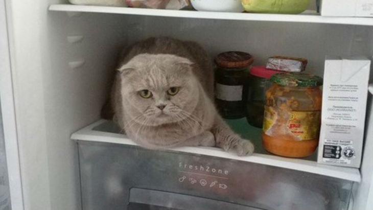 Kat zoekt verkoeling
