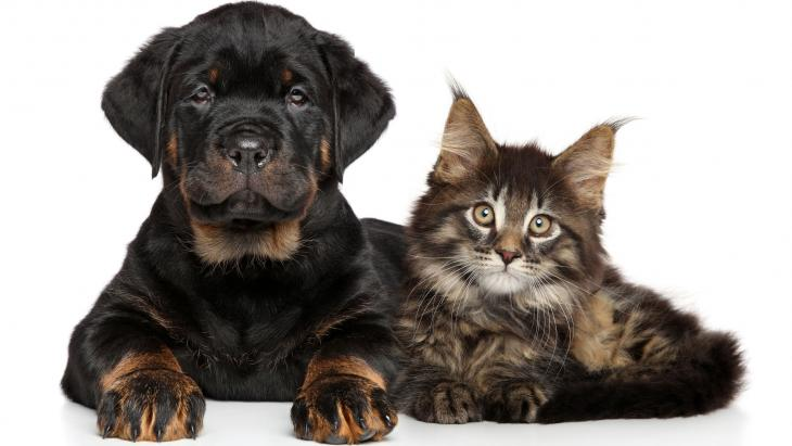 Bio cats & dogs
