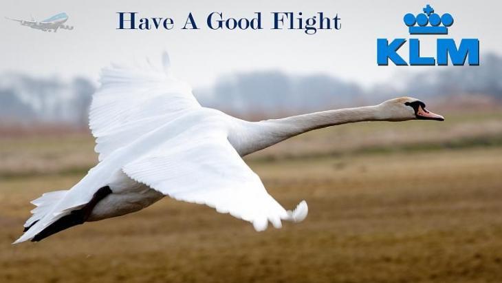 KLM-zwanen
