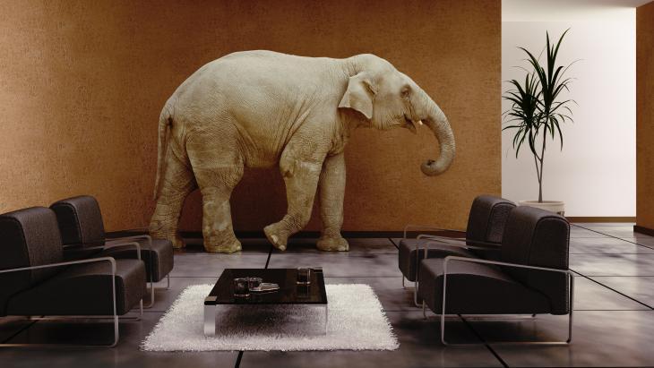 Olifant in bestuurskamer