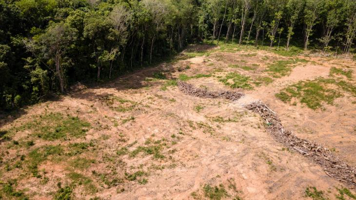 Voor palmolie ontbost gebied