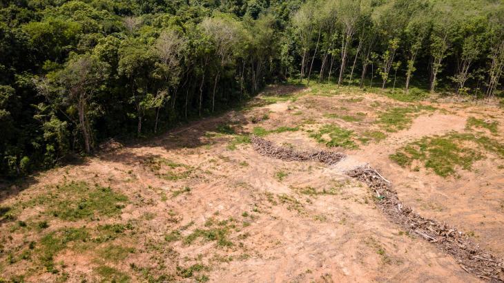 Voor palmolieteelt ontgonnen terrein