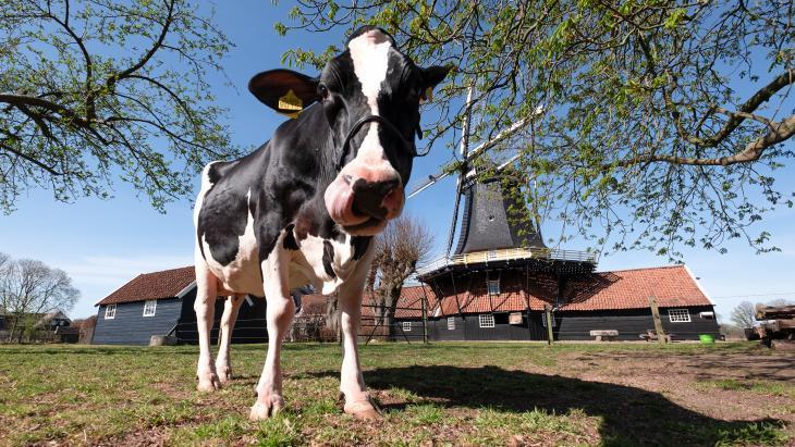 Cowfluencer Liesje22 bij Pelmolen ter Horst - Visit Twente