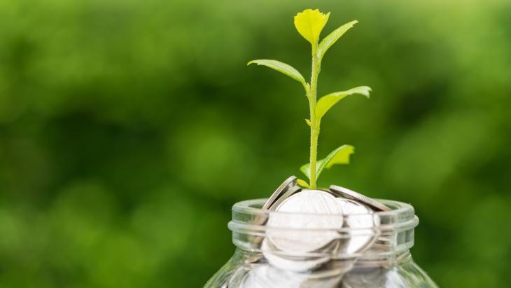 plantje groeit op geld