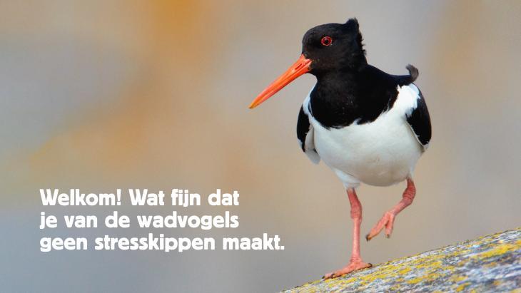 Vogelbescherming start campagne om de wadvogels te beschermen